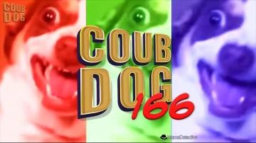 Best coub dog #166 | март 2019 | coub лучшее | ютуб свежие приколы