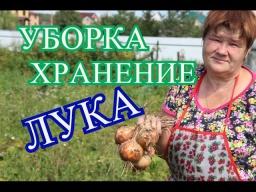 Юлия Минаева -  Советы по Уборке и Хранению Лука. (30.07.16)
