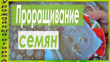 """Урожайный огород НАДЕЖНЫЙ """"ДЕДОВСКИЙ"""" СПОСОБ ПРОРАЩИВАНИЯ СЕМЯН ОГУРЦОВ!"""