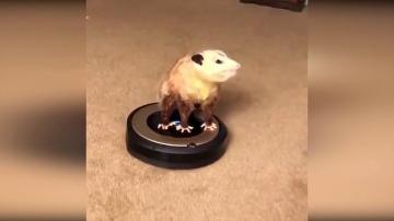 Видео приколы с животными 2019 #14 Смешные приколы с котами, смешные животные 2019