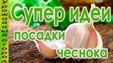Урожайный огород СУПЕР ИДЕИ ДЛЯ ПОСАДКИ ЧЕСНОКА И ЛУКА!!!