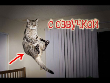 Приколы с котами с ОЗВУЧКОЙ-Смешные коты и кошки 2018 Ржака от Domi Show