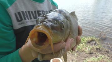 Рыбалка. Ловля  карпа и карася на поплавок .My fishing.