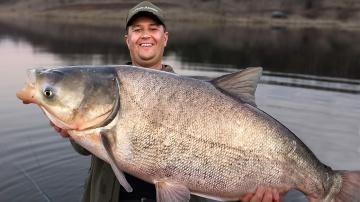 РЫБАЛКА НА ГРОМАДНЫХ РЫБ! ТРОФЕЙНЫЙ ТОЛСТОЛОБ! Весенняя рыбалка с лодки 2019