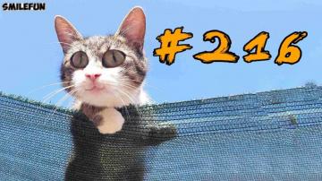 Смешные коты и котики, приколы с котов до слез – Смешные кошки – Funny Cats 2019