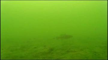 Смелый ротан и озеро полное рыбы (зимняя рыбалка)