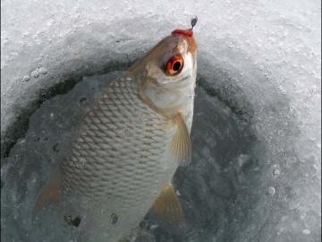 Зимняя рыбалка ловля плотвы и окуня