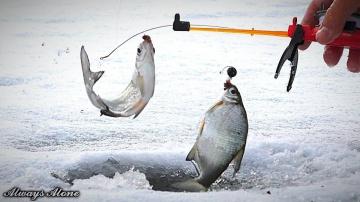 Зимняя рыбалка. СЧАСТЬЕ РЫБАКА, когда нашёл рыбу. Ловля белой рыбы и окуня. Отличный клёв.
