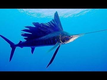 Самые опасные животные Морские глубины / Документальный фильм HD