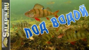 Окунь клюет на блесну и мормышку подводное видео salapin ru