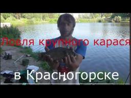 Ловля крупного карася В КРАСНОГОРСКЕ Catching big carp IN KRASNOGORSK
