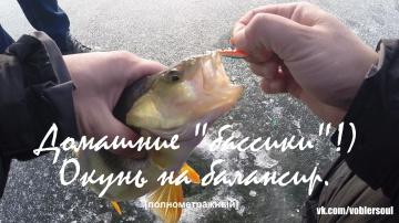 Ловля крупного окуня на балансир в ноябре Зимняя рыбалка