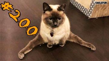 Смешные коты и котики приколы про котов до слез-Смешные кошки