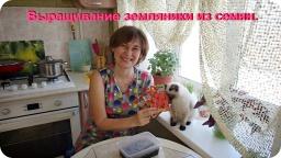 Ольга Уголок -  Посев земляники семенами. Мой первый опыт.