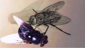 Как нарисовать муху карандашом/Учимся рисовать муху простым карандашом