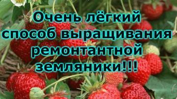 Сад Огород своими руками ВЫРАЩИВАНИЕ ЗЕМЛЯНИКИ СЕМЕНАМИ-ОТ ПОСЕВА ДО ПИКИРОВКИ РАССАДЫ!