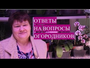 Юлия Минаева Ответы На Вопросы, Которые Интересуют Огородников. Часть 1.