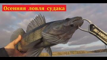Ловля судака осенью.  ЧАСТЬ 1   Простая рыбалка
