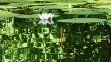 Рыбалка летом, ловля на поплавочную удочку. Необычная рыбалка.