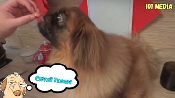 Смешное про Собак | Приколы с Животными 2019 Собаки и Сосиски
