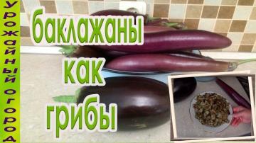 Урожайный огород ЖАРЕНЫЕ БАКЛАЖАНЫ КАК ГРИБЫ !!!ОЧЕНЬ ВКУСНАЯ ЗАКУСКА!!!