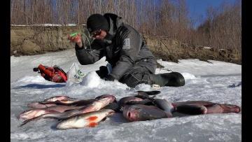 ЭТО ПОСЛЕДНИЙ ЛЕД РЕБЯТА!!Рыбалка 2020,лещ,окунь,комбайны,Обь,безмотылка.