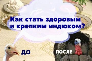 Юлия Минаева Как вырастить здоровых и крепких индюшек.