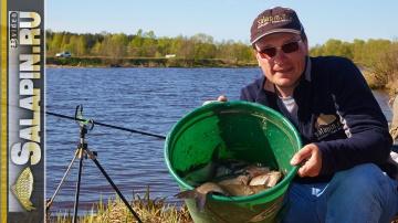 Рыбалка: подлещик весной на фидер на малой речке [salapinru]