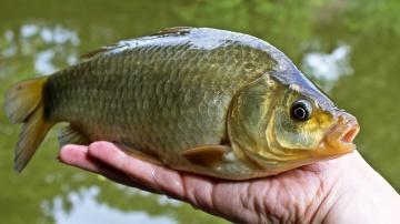 Рыбалка 2019 | ловля карася в прекрасную погоду