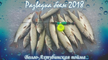Разведка боем 2018 Волго-Ахтубинская пойма