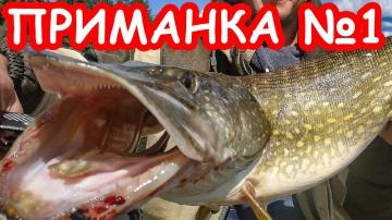 Приманка №1 на пассивную щуку Ловля щуки осенью Рыбалка 2019