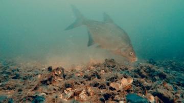 Рыбалка на Фидер - Ловля Леща Осенью | Прикормка и Подводная съёмка