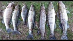 Джиг, судак, щука, окунь - рыбалка с ночёвкой
