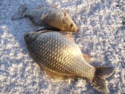 Зимняя рыбалка на карася на мормышку Секреты ловли