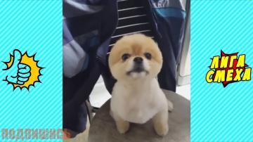 Попробуй Не Засмеяться С Животными - Смешные Собаки Подборка! Видео Приколы С Собаками 2018!
