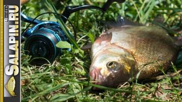 Рыбалка с фидером на Москва-реке в июне salapinru