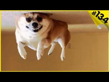 Смешные видео про животных приколы с собаками 2019 До слёз 6 минут