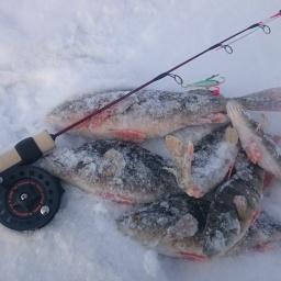 Ищем и ловим крупного окуня на балансир | Зимняя рыбалка