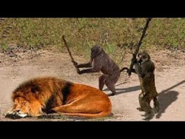 ПРИКОЛЫ С ЖИВОТНЫМИ ПОДБОРКА ЛУЧШИХ МОМЕНТОВ  Видео диких животных
