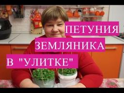 Юлия Минаева -  Земляника и петуния. Рассада в улитке.