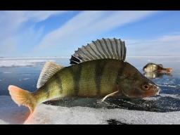 Русская, Зимняя Рыбалка На Алтае!