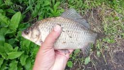 Рыбалка на поплавок ловим Чебака и крупного Карася