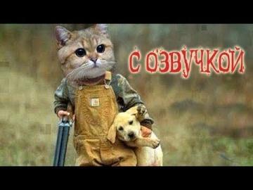 Приколы с котами С ОЗВУЧКОЙ/ПОПРОБУЙ НЕ ЗАСМЕЯТЬСЯ/РЖАКА ДО СЛЁЗ PSO