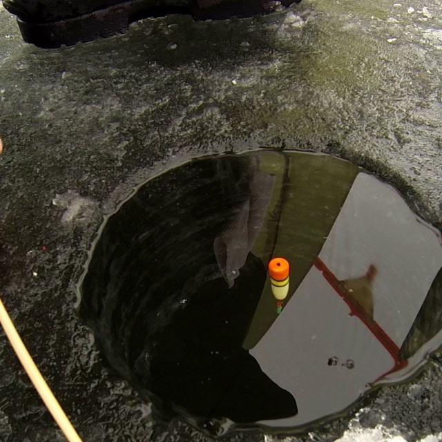 Зимняя рыбалка поплавочная ловля леща salapin ru