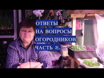Юлия Минаева Ответы На Вопросы, Которые Интересуют Огородников. Часть 2.