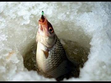 Зимняя рыбалка ловля плотвы, первый опыт. Калининград Куршский залив. 2016