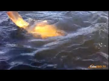 Ловля Монстров на реке Стугна. Сазан.  Рыбалка что захватывает дух...