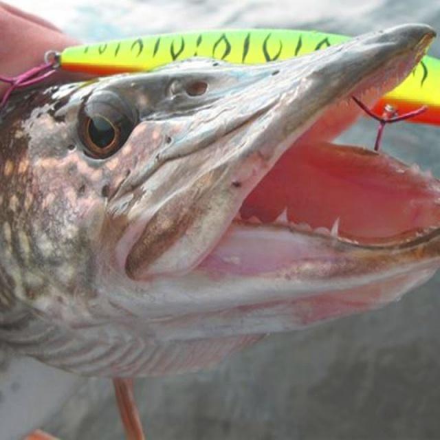 Ловля щуки на спиннинг на секретном озере на китайский воблер Удачная рыбалка осенью
