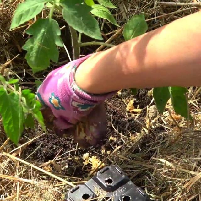 Урожайный огород СРОЧНО СДЕЛАЙТЕ ЭТО ПОСЛЕ ПОСАДКИ РАССАДЫ!!!НАДЁЖНАЯ ЗАЩИТА!