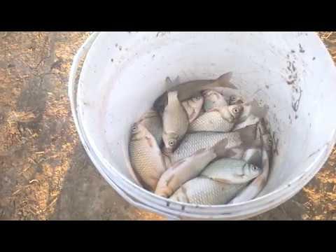 Осенняя рыбалка в Андреевке. Ловля карася.